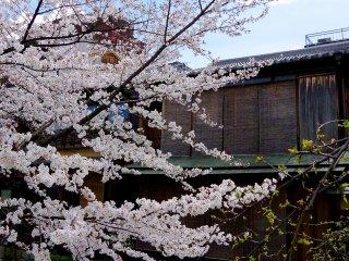 Gion Shirakawa est dans le quartier des divertissements