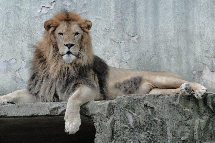 Vườn thú Asa