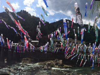 Thousands of koinobori (carp streamers)
