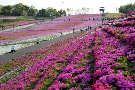도치기 현의 꽃 카펫 축제