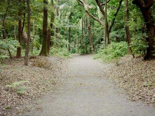 Un chemin paisible menant au sanctuaire