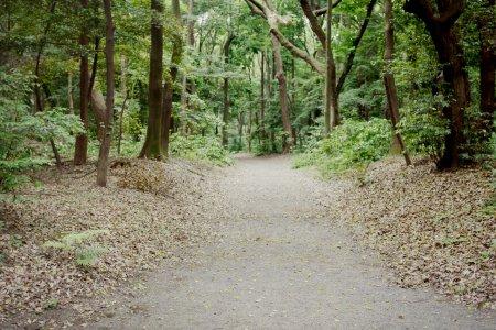 Après-midi au Meiji-jingû
