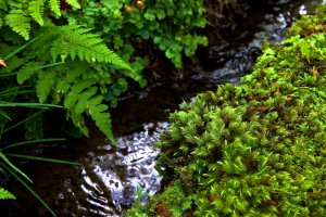 Water trickling from between mossy rocks