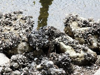 There's quite a few dirty sea shells on the side of the lake, there's also a sea or ocean type smell in the area mainly due to the dirty water.