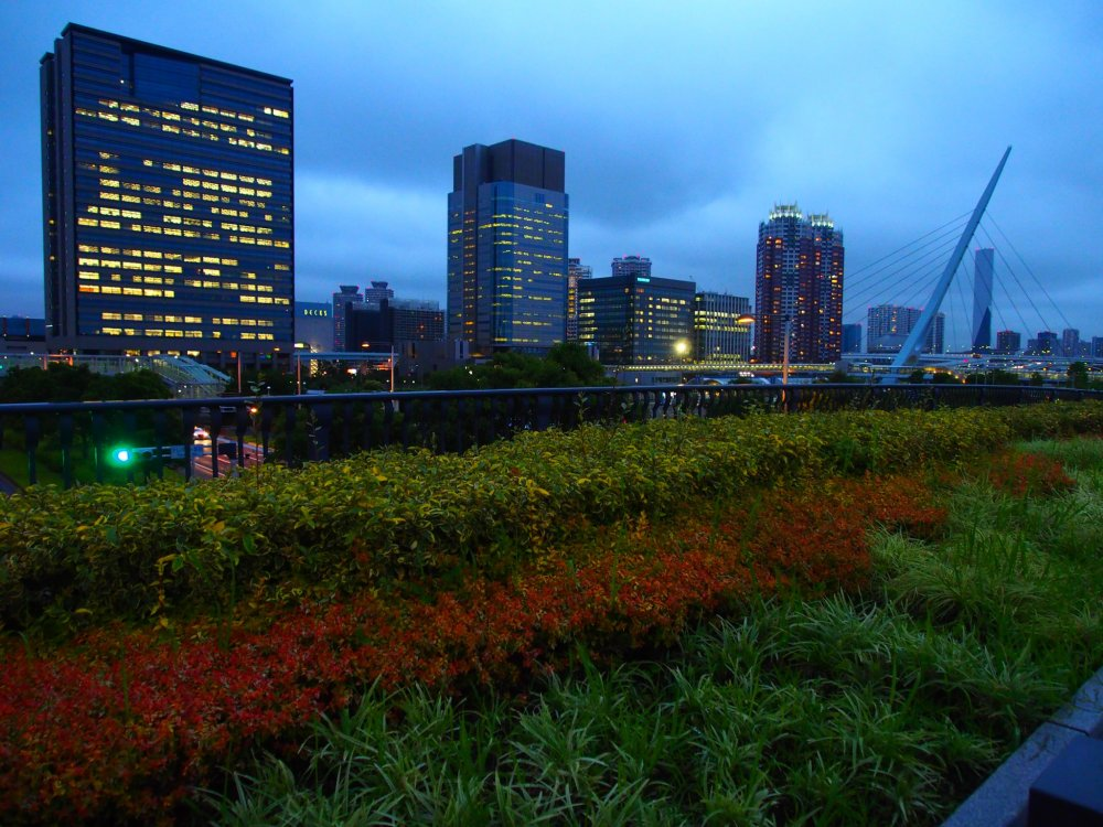 Odaiba transitions towards autumn
