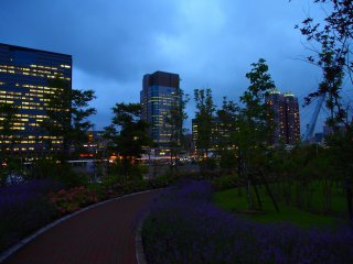 The Odaiba walkways are lined with flowers. The vivid reds and purples of the flowers are still visible in the early evenings.