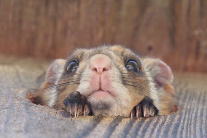 Rencontre avec un Écureuil Volant
