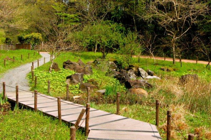 Zama's Hidden Gem - Yatoyama Park