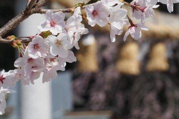 "The ""Other"" Nogi Shrine"