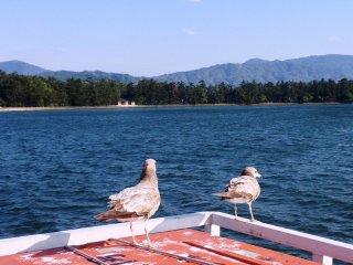 На обратном пути вы увидите куда больше чаек на лодке, хотя и они не вызовут подозрений