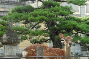 Dans les jardins autour du musée national de Nara
