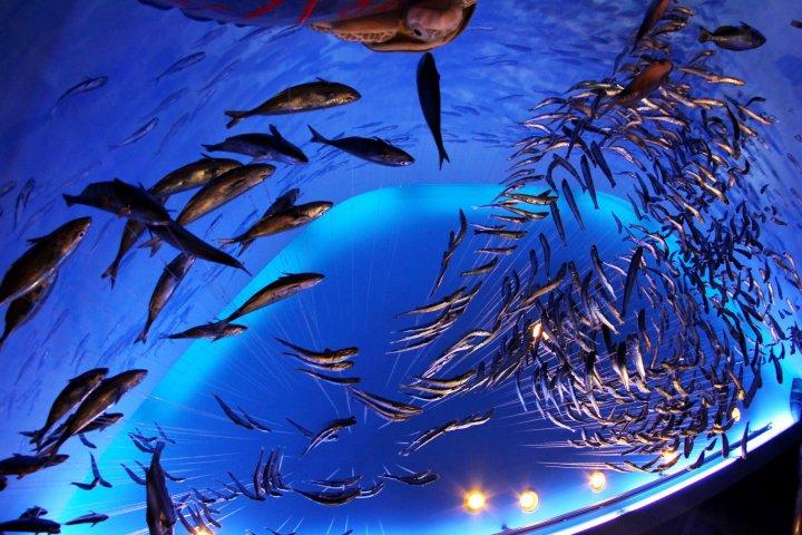 День в аквариуме Эносимы