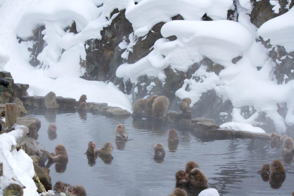 その隣には猿たちの露天風呂
