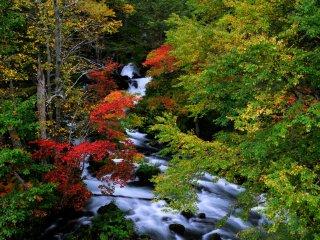 Les premières feuilles d'automne, prises du pont Takimi le long de la route Marimo, près du lac Akan