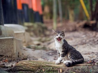 I can't tell if this cat is laughing or screaming