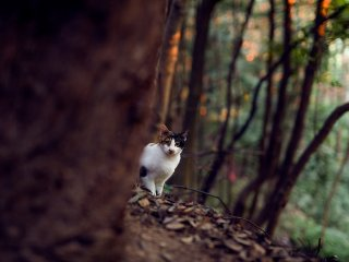 A cute cat peeks out from behind a tree trunk