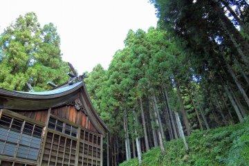 福井の森の白山神社