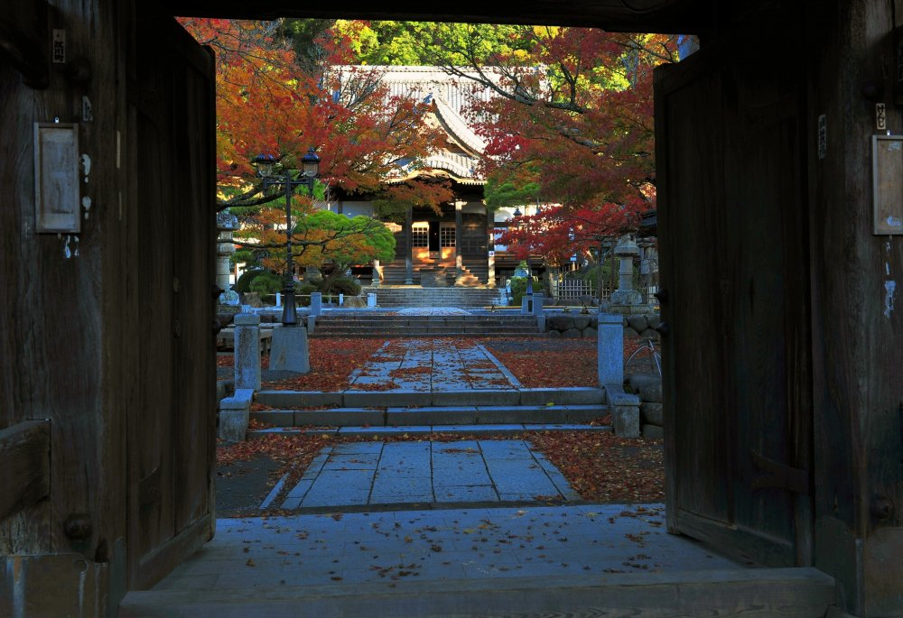 Shuzenji Temple's entrance gate and the pathway to the main hall. The fallen leaves are scattered about due to the heavy rain and strong wind of the previous day.