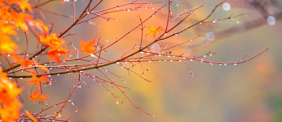 Autumn Foliage in the Rain