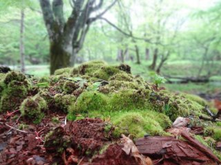 Where there is wetlands, there is moss.