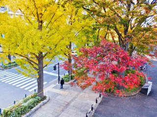 Although famous for its bright yellow leaves, Yamashita Park is also home to many other pretty colors