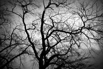 1000 Pohon Ceri di Musim Dingin