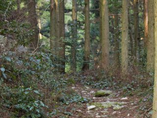 Take this trail into the woods toward Mt. Kana