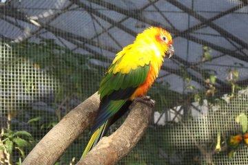 Taman Burung Kakegawa