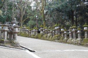 The stone lanterns of Kasuga Taisha