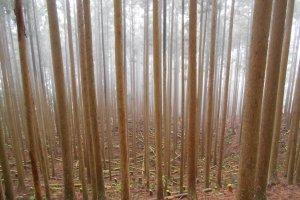 A mystical forest in Totsukawa