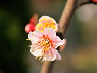 Such a beautiful flower!