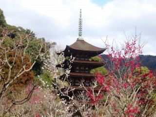 Plum blossoms frame the Rurikoji Pagoda in Yamaguchi City