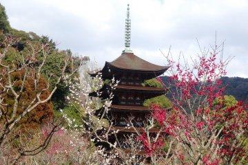 Plum Blossoms at Rurikoji Pagoda