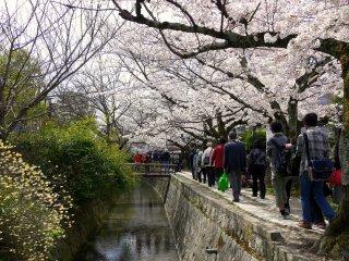 봄이 되면 많은 사람들이 이 길을 따라 걷는다.