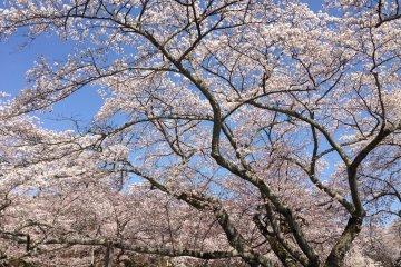 Повторное посещение парка Микамине