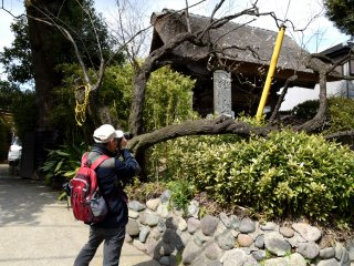 고쿠라쿠지 사원의 각진 사진을 찍은 사진작가. 나는 그의 뒤를 따라 같은 각도로