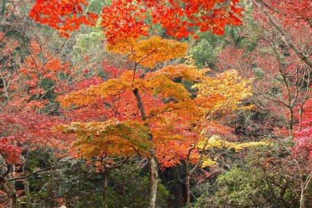 Parque Momijidani no Outono