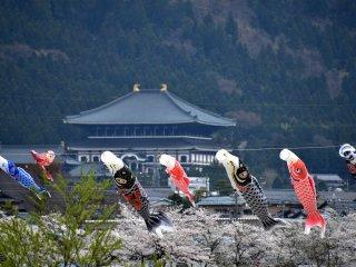 ริ้วประดับปลาคาร์ฟกับอาคารหลวงพ่อโตแห่งวัด  Shindai-ji  หลวงพ่อโตของวัดนี้องค์ใหญ่กว่าที่เมืองนารา