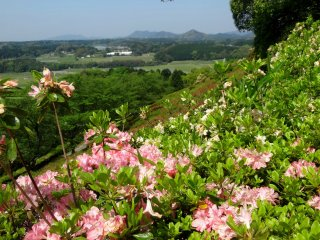 공원 꼭대기에서 구마모토현의 아름다운 경치를 감상할 수 있다