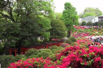 根津神社 – つつじが岡