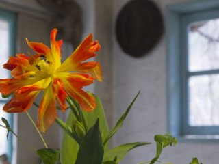 Though this flower doesn't come from the garden, others will once spring arrives