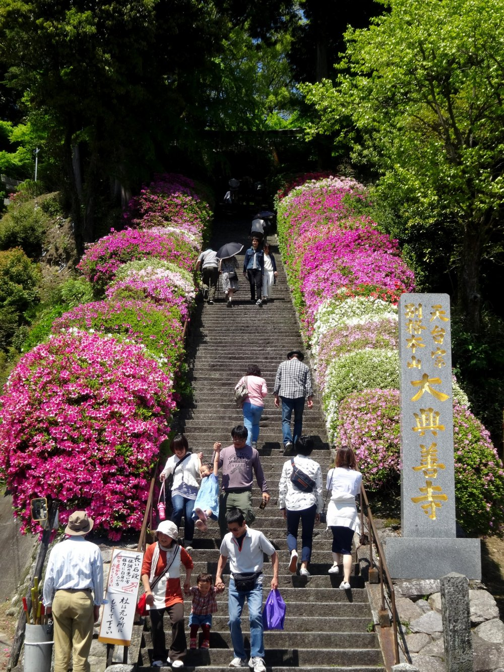 Even the temple's main staircase is lined with azaleas