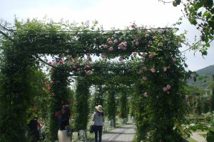 May is the rose festival where a variety of 1,0000 different types of flowers can be seen. There are 1110,000 flowers on display in total.