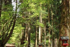 The ancient cedar-lined path to Okunomiya.