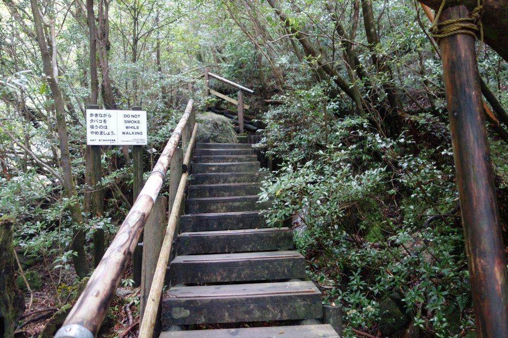 Les premières marches de la forêt de Shiratani Unsuikyo