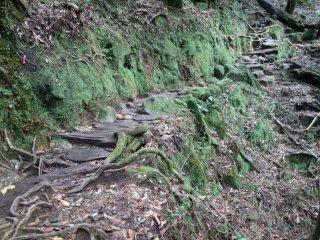 La forêt de Shiratani Unsuikyo ou la forêt de Princesse Mononoke