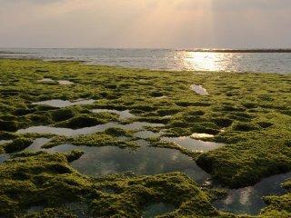 A Praia Esmeralda de Okinawa, no Ocean Expo Park, tem aproximadamente 14.8 hectares.