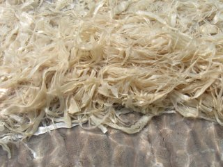 Japanese paper, known as washi, can be made from a range of plant fibers, including those of the Paper Mulberry tree. Here some processed strips are bleaching in the sun. No chemicals are used.
