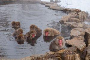 Les onsen, passe-temps préféré au Japon et expérience relaxante pour tous !