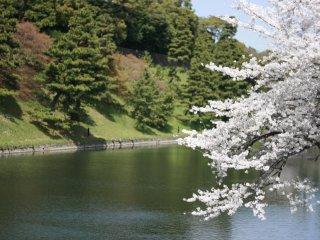 Sakura and moats